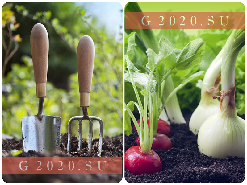 Лунный посевной календарь на 2020 года садовода и огородника для Сибири