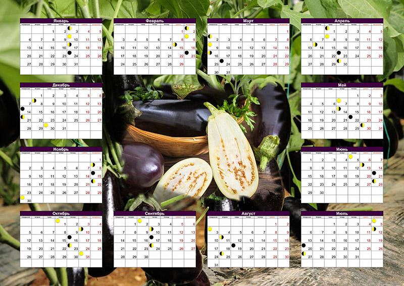 Когда сажать баклажаны на рассаду в 2020 году по лунному календарю, благоприятные дни