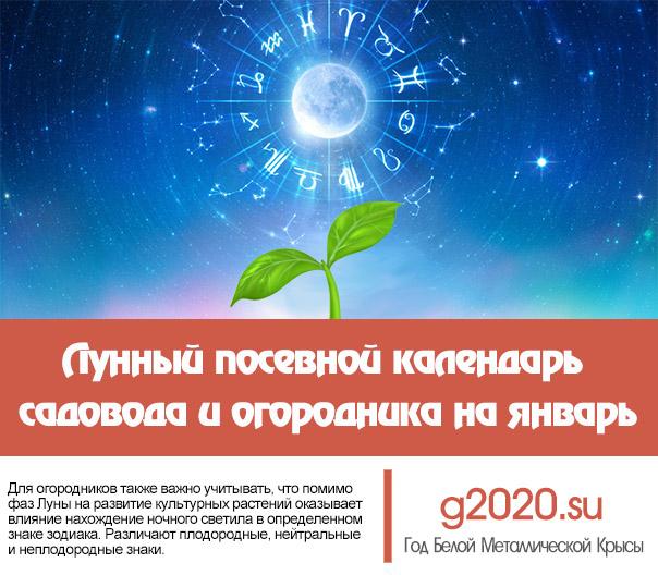 Лунный посевной календарь на 2020 года садовода и огородника на январь