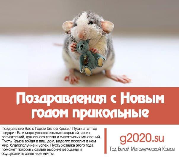 кто смешные поздравления с годом крысы в прозе блум пошутил, что